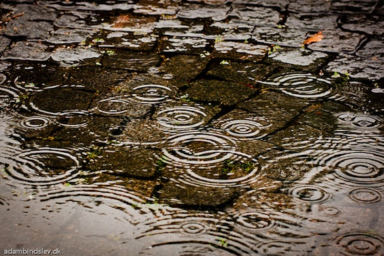 A rain puddle with ripples of water