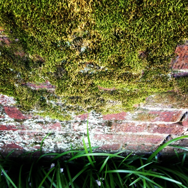 photo of few rows of brick topped with moss
